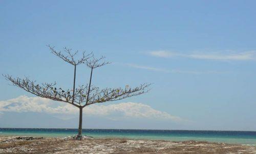 Zdjecie INDONEZJA / brak / Gili Trawangan / Gili tree
