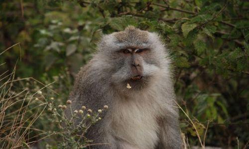 Zdjecie INDONEZJA / Lombok / Rinjani  / Małpka z Lomboku