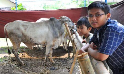 Zdjęcie INDONEZJA / Java Centralna / Yogyakarta / Idul Adha 1431