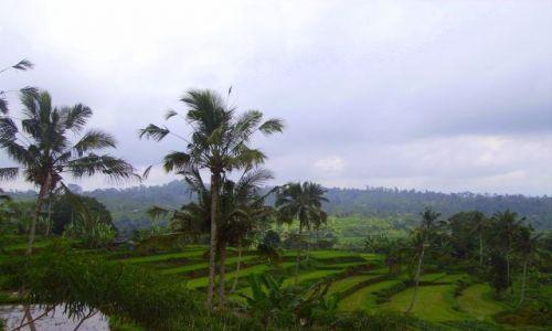 Zdjecie INDONEZJA / Bali / Bali / tarasy ryżowe