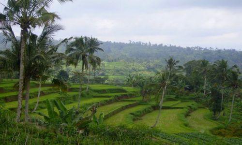 Zdjecie INDONEZJA / Bali / Bali / tarasy ryżowe -2