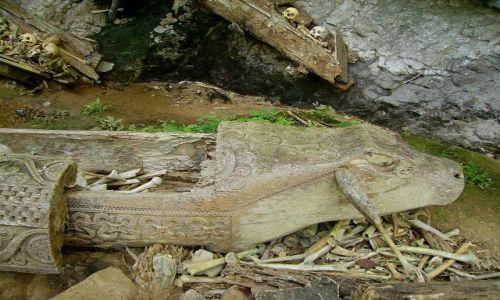 Zdjecie INDONEZJA / Sulawesi Południowe / Kete-Kesu / trumna mężczyzny