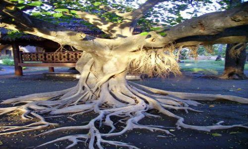 Zdjęcie INDONEZJA / Gili Air / wysepka Gili Air / tajemnicze drzewo