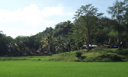 Zdjecie INDONEZJA / Tana Toraja, Sulawesi (Celebes) / Kete Kesu / ... patrząc przez pole ...