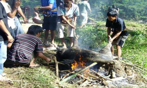 INDONEZJA / Południowe Sulawesi / okolice Rantepao / przygotowania do uczty