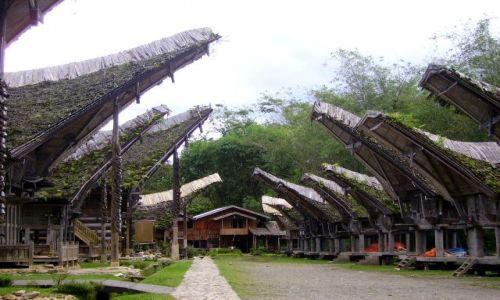 INDONEZJA / Południowe Sulawesi / wioska w Kete-Kesu / niezwykłe domy Toradżów
