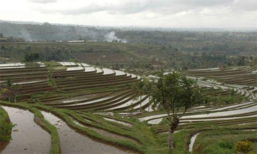 Zdjęcie INDONEZJA / Bali / okolice Ubud / Pola ryżowe