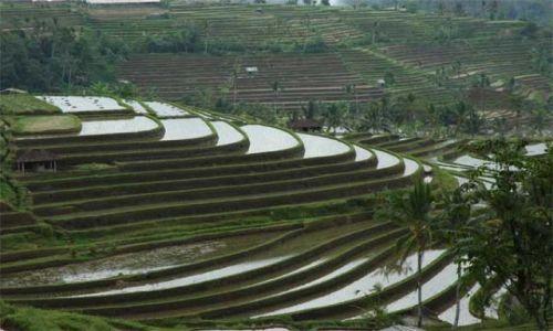 Zdjęcie INDONEZJA / Bali / centrum wyspy / Pola ryżowe