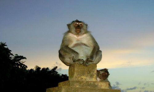 Zdjecie INDONEZJA / Bali / w światyni Ulu Watu / makaki ze świątyni