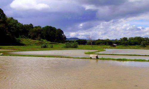 INDONEZJA / Sulawesi Południowe / okolice Rantepao / ryżowe pola w wodzie mokną ......