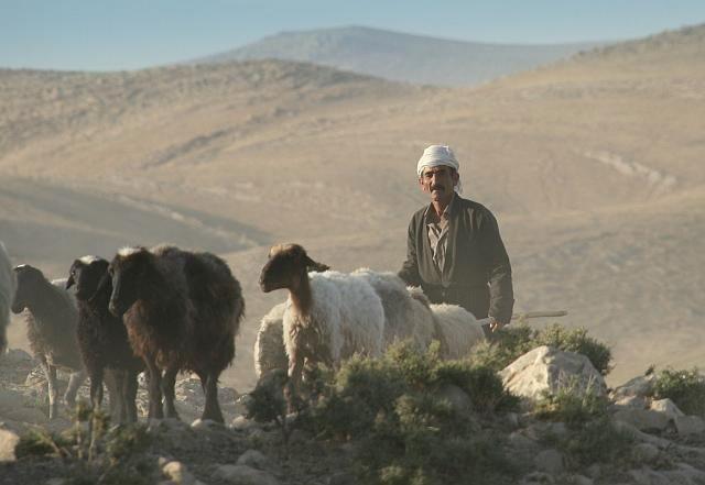Zdjęcia: Bazian, Kurdystan, Pasterz, IRAK