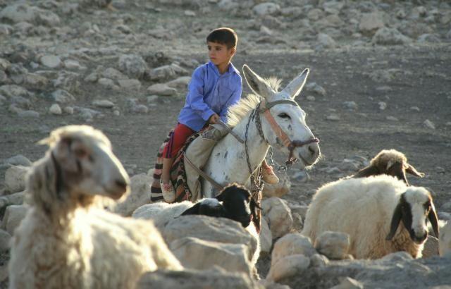 Zdjęcia: Bazian, Kurdystan, Maly pasterz, IRAK