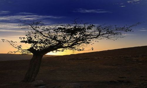 Zdjęcie IRAK / Kurdystan / Okolice Bazian / Samotnik