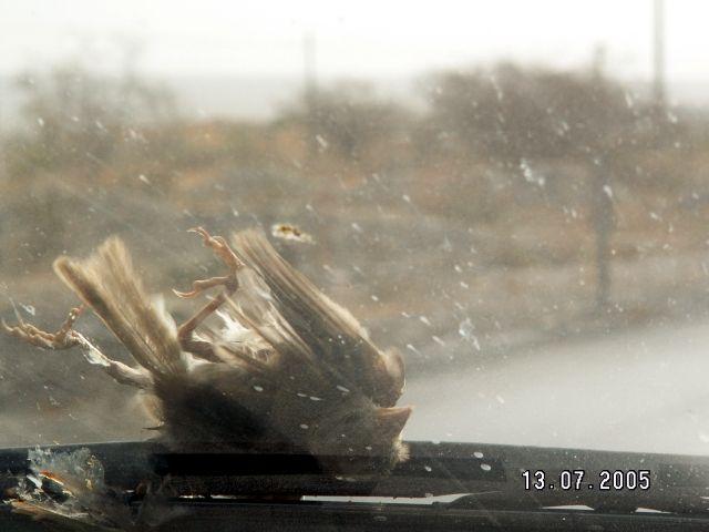 Zdjęcia: Gdzieś po drodze, Życie jest ciężkie i krótkie, IRAN