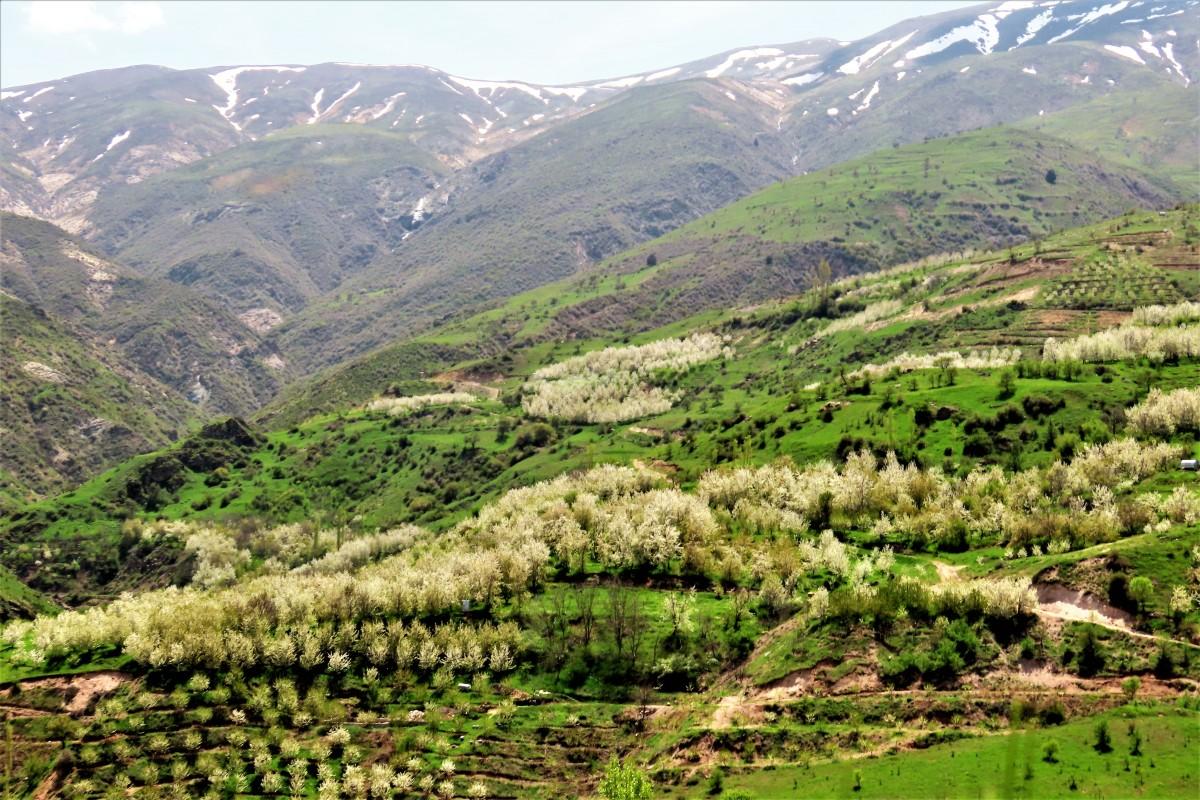 Zdjęcia: Elburs, Dolina Alamut, IRAN