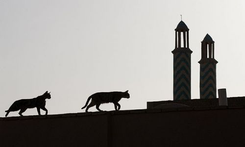 Zdjecie IRAN / Yazd / Yazd / kocie sciezki