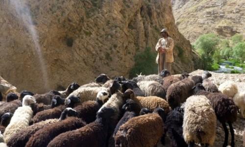 Zdjęcie IRAN / Okolice wsi Polour / Kanion rzeki Zajadane / Wodzu, prowadź!