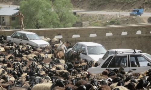 Zdjęcie IRAN / Okolice wsi Polour / Most na rzece Zajadane / Traffic jam