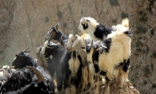 Zdjecie IRAN / Okolice wsi Polour / Kanion rzeki Zajadane /