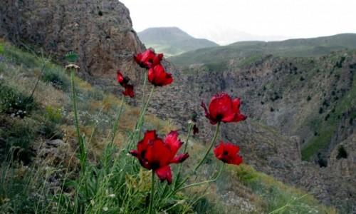 Zdjecie IRAN / Okolice wsi Polour / Pobliskie g�ry / Takie urokliwe
