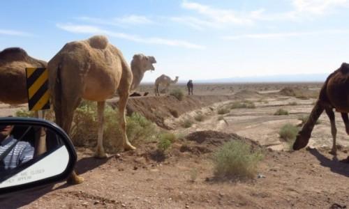 IRAN / - / Pustynia Dasht-e Kavir / Wielbłądy spotkane przy drodze na pustyni