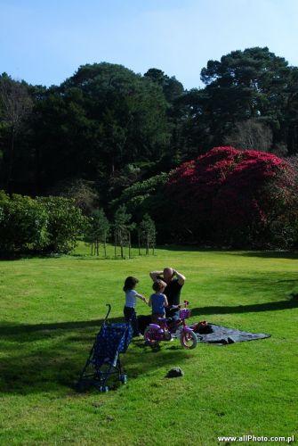 Zdjęcia: Dublin, Kerry, Muckross park, Killarney, Kerry, IRLANDIA