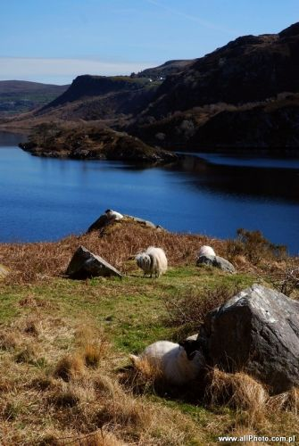 Zdjęcia: Dublin, Kerry, Kerry Peninsula, Kerry, IRLANDIA