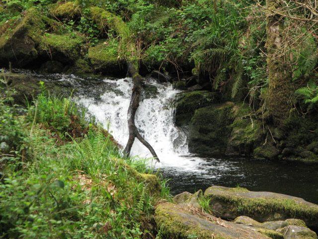 Zdjęcia: Park Narodowy Killarney, Killarney, Park Narodowy Killarney, IRLANDIA