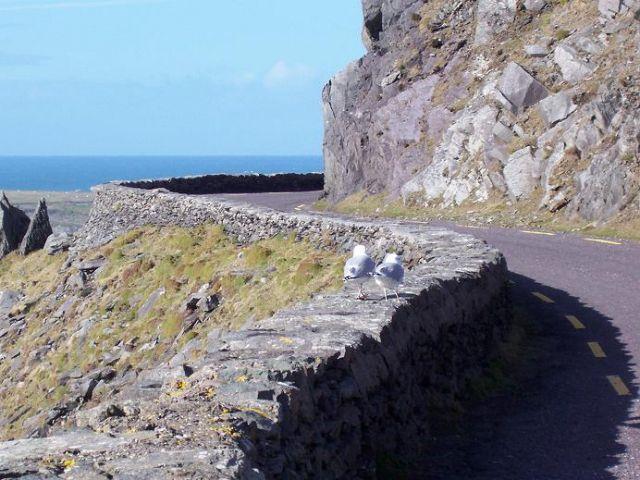 Zdjęcia: Ring of Kerry, klify, IRLANDIA