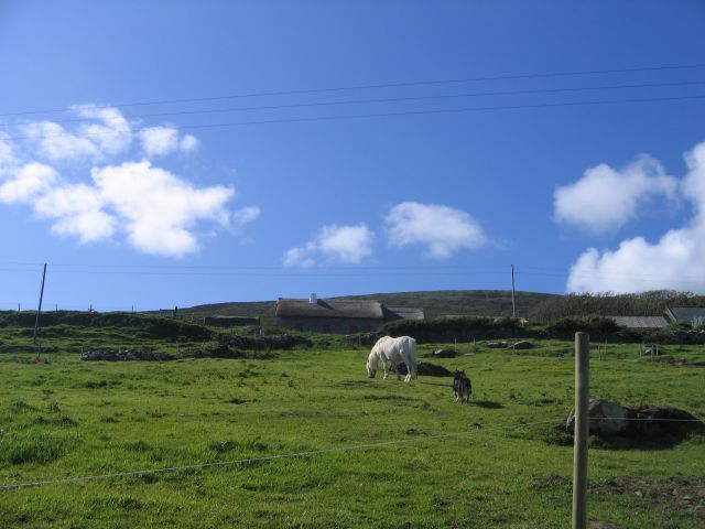 Zdjęcia: Ceann Tra, Płw.Dingle, Farma w Ceann Tra, IRLANDIA