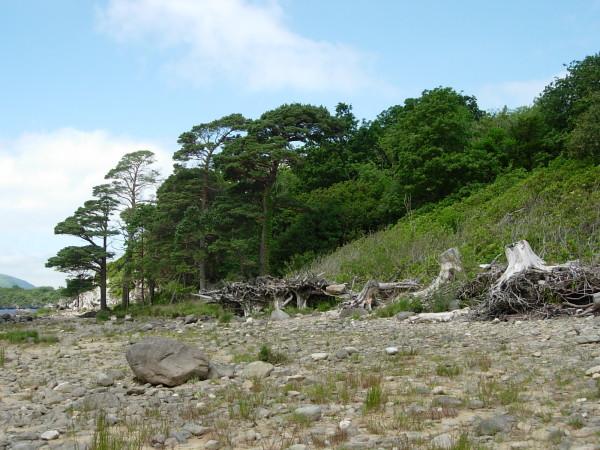 Zdjęcia: Killarney National Park, hrabstwo Kerry, My Irish reality, IRLANDIA
