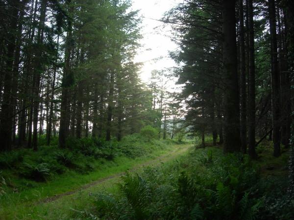 Zdjęcia: okolice Tralee, hrabstwo Kerry, My Irish reality, IRLANDIA
