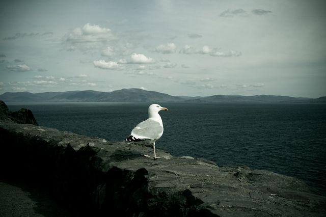 Zdjęcia: Inch, County Kerry, Inch9, IRLANDIA