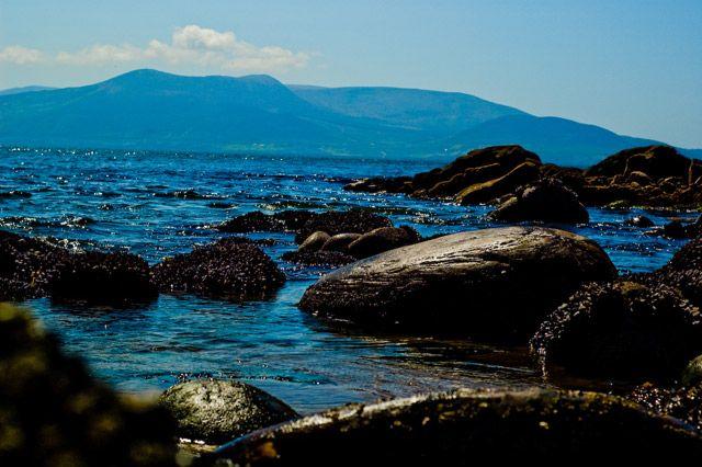 Zdjęcia: Irlandia, okolice Inch, skorupiaczki2, IRLANDIA