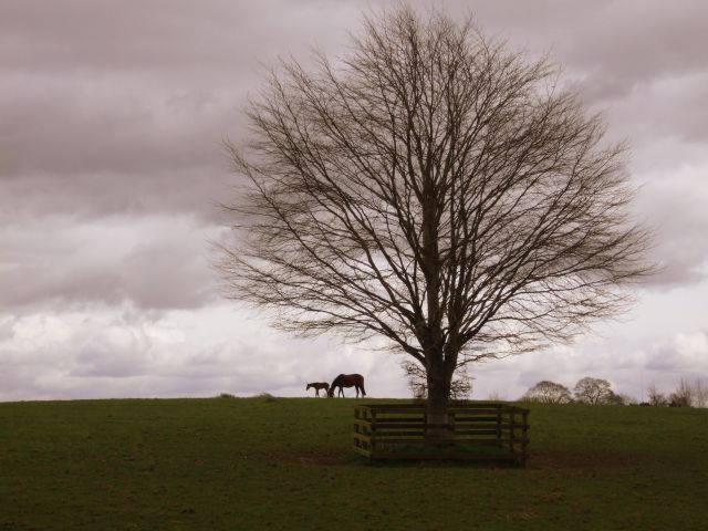Zdjęcia: Narodowa stadnina koni, Co. Kildare, Konie na wzgórzu, IRLANDIA
