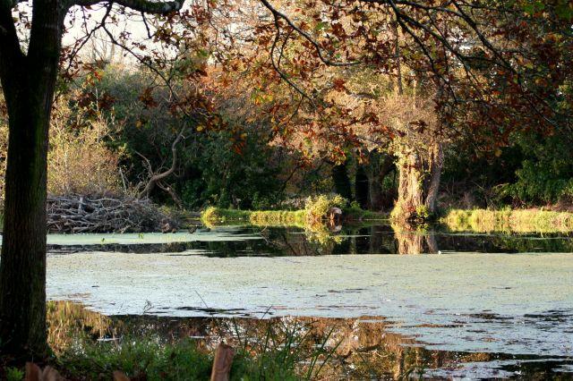 Zdjęcia: Waterford, jesien..., IRLANDIA