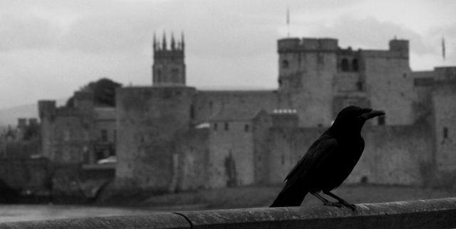 Zdjęcia: limerick, czarny rycerz :), IRLANDIA