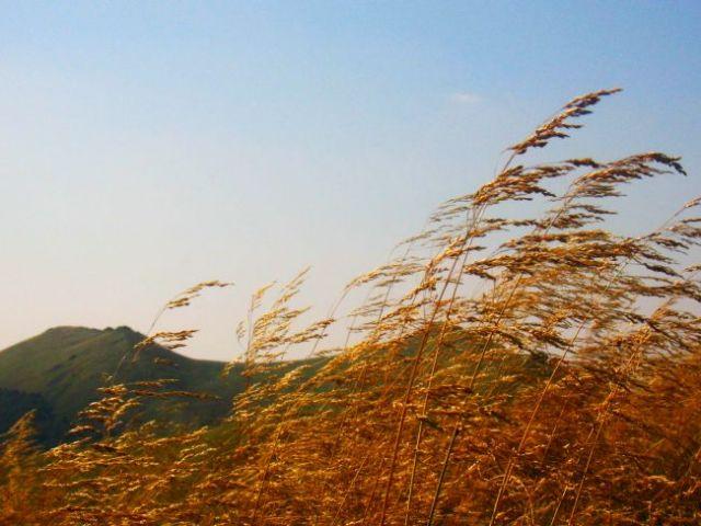 Zdj�cia: g�ry wicklow , trawy, IRLANDIA