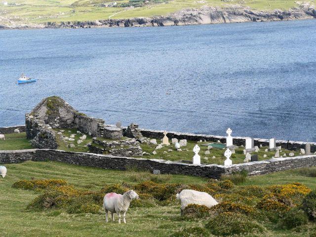Zdjęcia: tuam, galway, wypas owiec, IRLANDIA