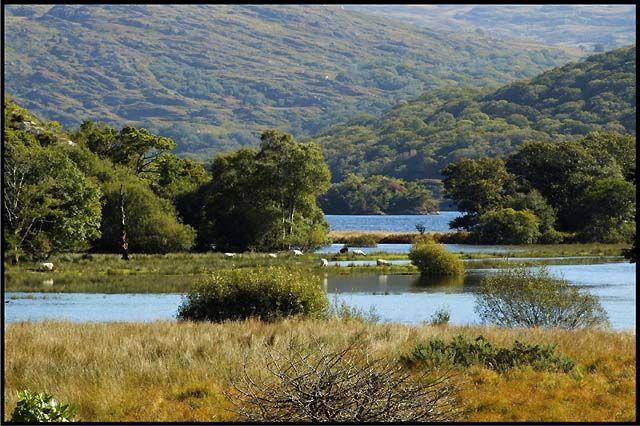 Zdjęcia: Killarney National Park, co. Kerry, Killarney National Park, IRLANDIA