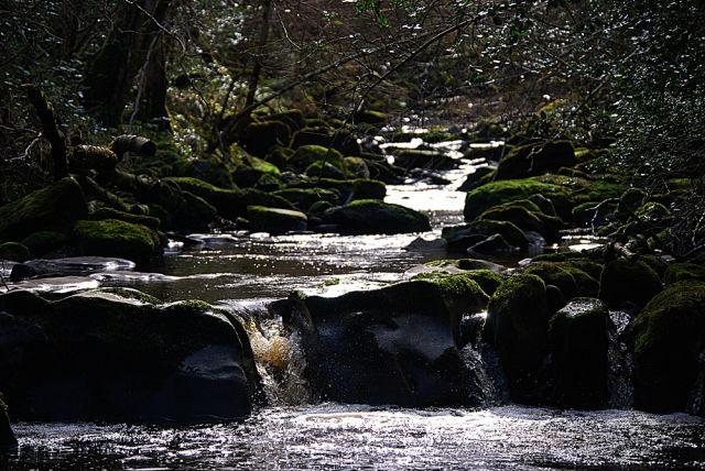 Zdjęcia: Glenbarrow, Portlaoise , Koryto rzeczne :), IRLANDIA