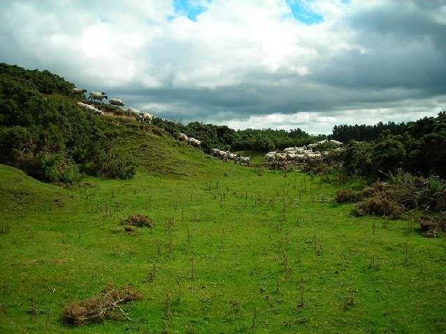 Zdjęcia: Curragh, Hrabstwo Kildare, Pastwiska w okolicy Newbridge, IRLANDIA