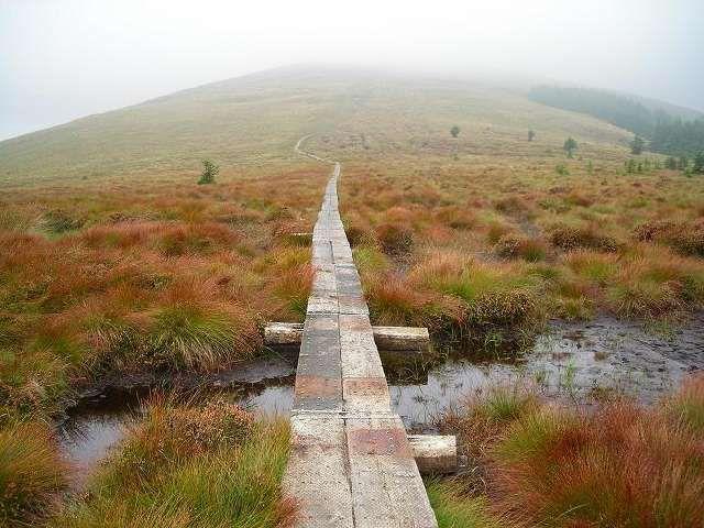 Zdjęcia: Gory Wicklow, Hrabstwo Wicklow, Przez torfowisko na szczyt, IRLANDIA