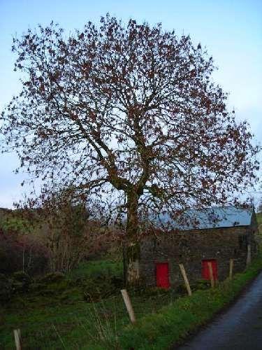 Zdjęcia: Dokladnie nie pamietam, Hrabstwo Leitrim, W drodze do Manorhamilton, IRLANDIA
