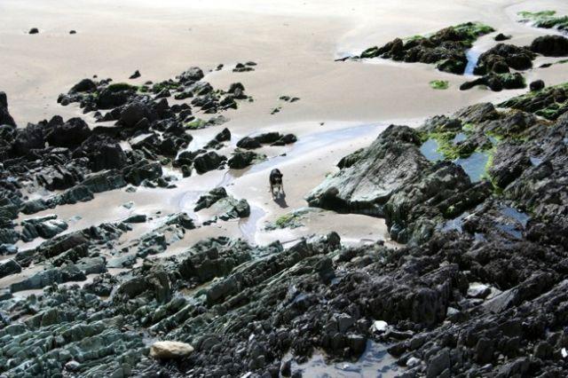 Zdjęcia: przy drodze R566, Samotny wśród skał., IRLANDIA