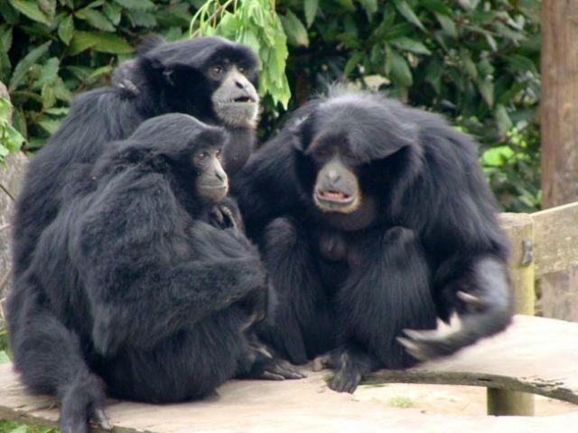 Zdjęcia: Fota, Fota Wildlife Park, IRLANDIA