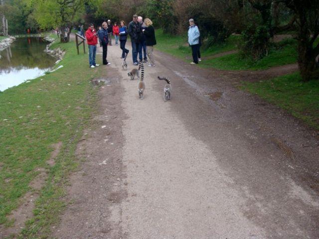 Zdjęcia: Fota, Fota Wildlife Park #6, IRLANDIA