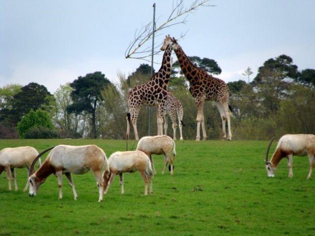 Zdjęcia: Fota, Fota Wildlife Park #8, IRLANDIA