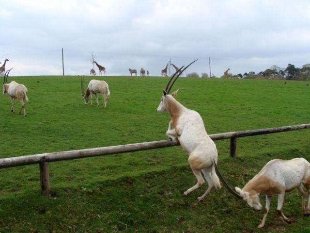 Zdjęcia: Fota, Fota Wildlife Park #9, IRLANDIA