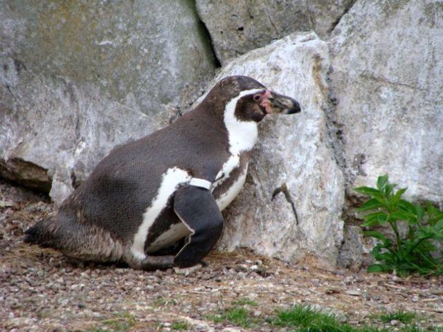 Zdjęcia: FOTA, Fota Wildlife Park #12, IRLANDIA